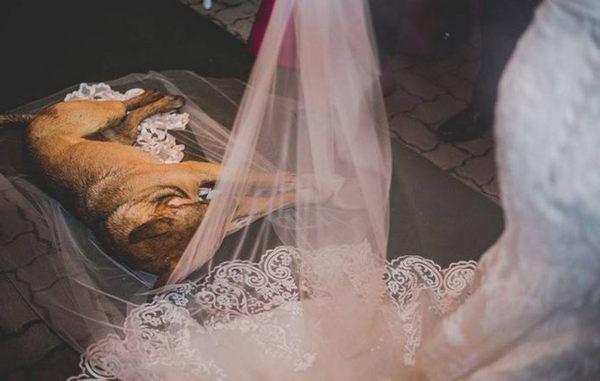 Під час весілля до церкви зайшов безпритульний пес і ліг на фату молодої. П0дивіться що сталося далі!