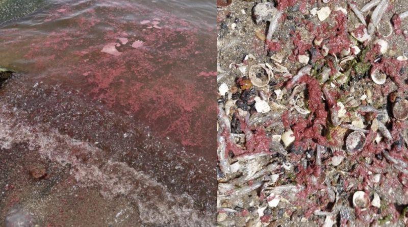 В море на улюбленому курорті українців вилилося багато краски: гине риба, людям заборонили купатися (фото)