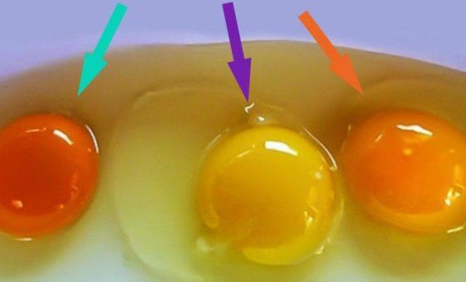 Вгадайте: яке з цих яєць було знесено здоровою куркою? Відповідь вас здивує…!