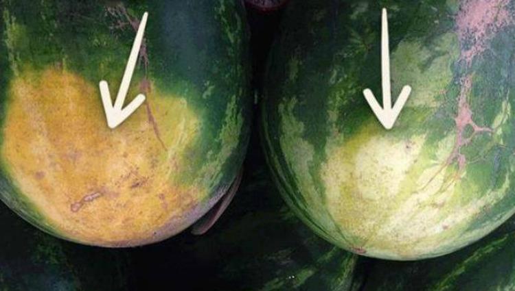 Щоб вибрати смачний кавун, не потрібно по ньому стукати: 4 підказки від фермера…