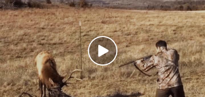 Цей молодий хлопчина направив рушницю на оленя! Але що сталося в наступну мить, повалить вас в ш0к!