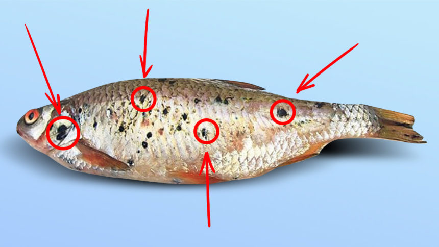 Ніколи не купуйте рибу з такими чорними цятками! Ця інформація може врятувати вам життя!