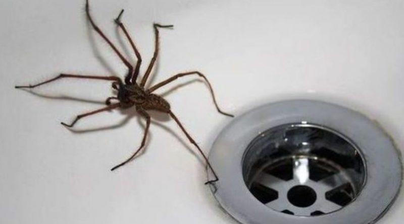 """""""Ніколи, чуєш, ніколи не вбuвaй павука у власному будинку!"""" – кричала мені услід бабуся! Лише згодом я зрозуміла чому…"""
