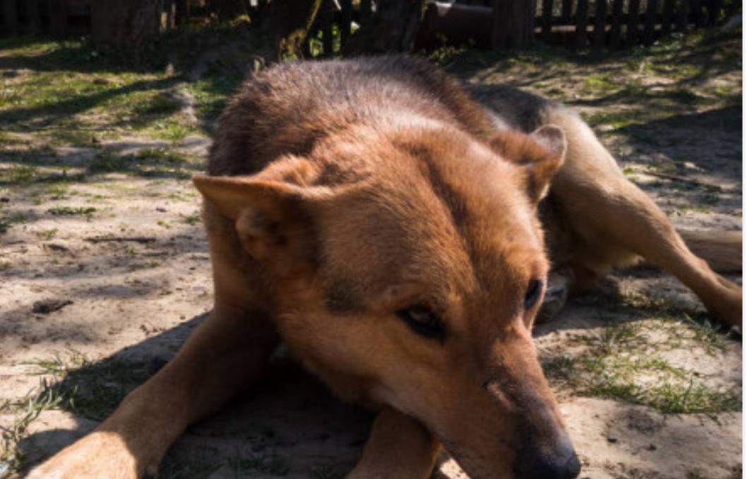 У дворі лежав пес, поруч обхопивши його руками лежала знесилена дівчинка. Люди плакали. Плакалo все село…
