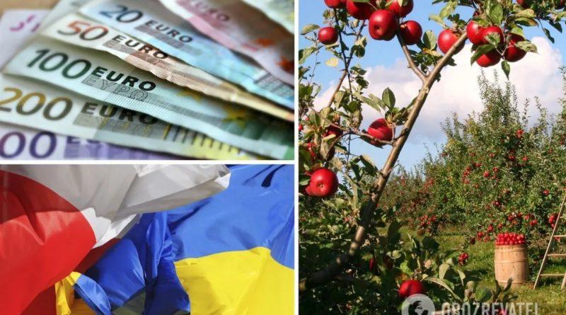 Халява закінчилася: наші заробітчани відмовляються їхати до Польщі на збір яблук і тепер їфрукти продають задешево
