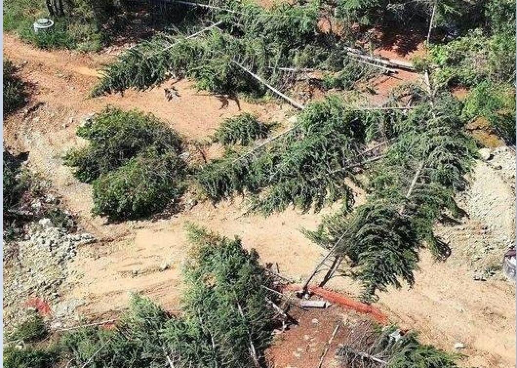 """""""Лежать, як діди на полі бою"""": В окупованому Севастополі за ніч вирубали 363 дерева. Які висаджували ті самі ветерани…"""